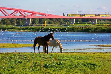 Hanze Zwolle Bogen Eisenbahnbrücke  von Anton de Zeeuw