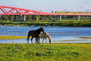Hanze Zwolle arc pont de chemin de fer sur Anton de Zeeuw