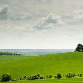 Boom op heuvel in het glooiende lentegroene Engelse landschap van Danny Motshagen