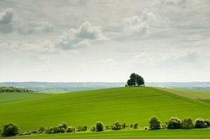 Einsamer Baum auf Hügel in der grünen englischen Landschaft von Danny Motshagen