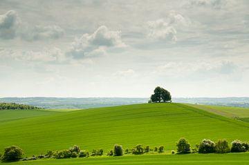 Eenzame boom op heuvel in het groene Engelse landschap van Danny Motshagen