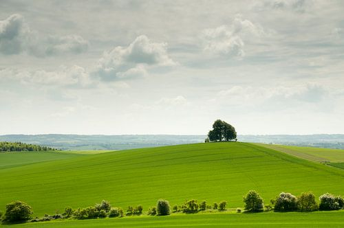 Eenzame boom op heuvel in het groene Engelse landschap van