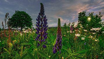 Landschaft Blumen / Blumenwiese Natur von Johnny Flash