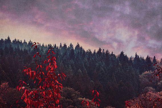 Een Droom Weg - bos op herfstavond