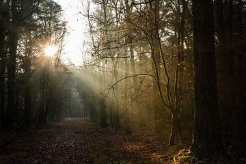 Zonnestralen op een koude ochtend