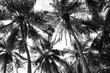 Atmosphärische Palmen schwarz und weiß von Bianca ter Riet