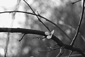 Frühling (II) von Marianna Pobedimova
