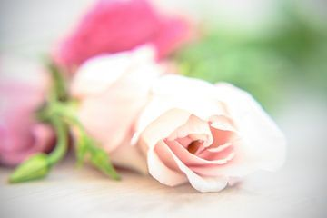 Des roses douces sur Ellinor Creation