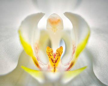 Orchidee von Wim van Beelen