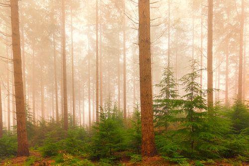 Mistig dennenbomen landschap tijdens een mistige herfstdag