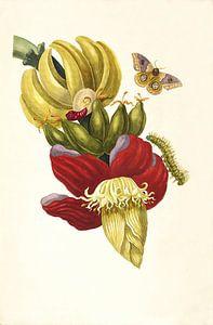 Prent van bananenplant