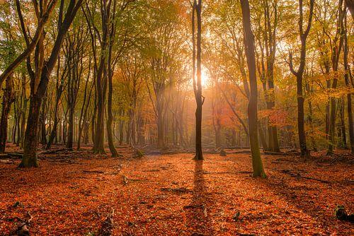 Speulderbos in de Herfst
