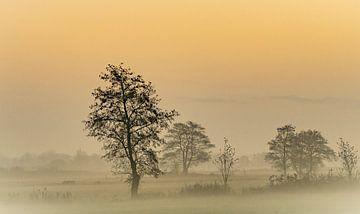 Golden misty morning sur Teo Goudriaan
