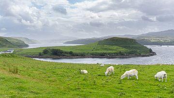 Hochland-Landschaft mit Schafen und Seen von Max Mayorov