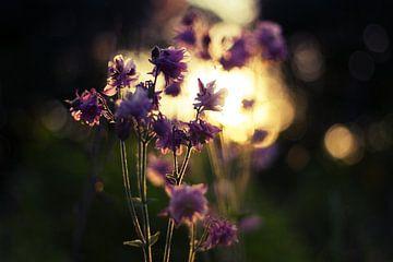 Morgenlicht von Malte Pott