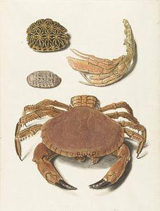 Een krab, een schaar van een krab en twee schilden van schildpadden, Johann Gustav Hoch