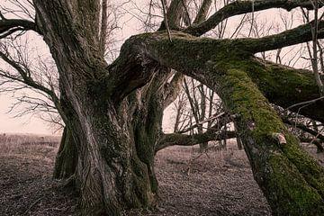 moosbewachsener Baum von Bert-Jan de Wagenaar