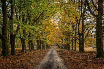 Het bospad in herfstkleuren op de Hoge Veluwe van Arisca van 't Hof