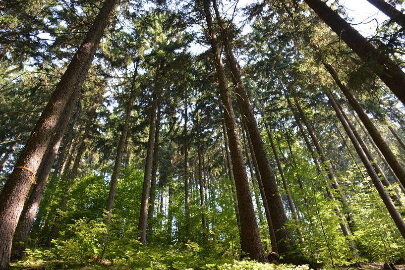 Bad Sacha de Harz van Henriette Tischler van Sleen
