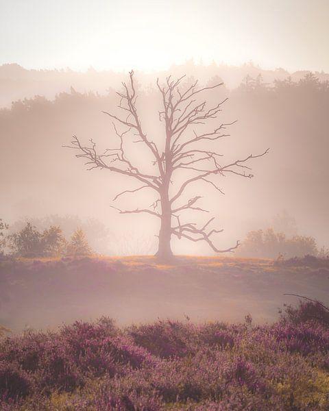 Zonsopkomst op de Posbank (dode boom) van Nicky Kapel