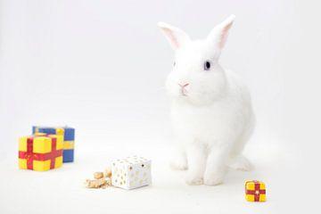 Wit konijn van Maxime Jaarsveld