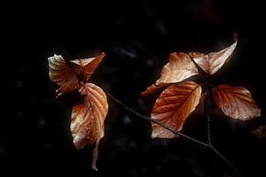 Herfst Bladeren van