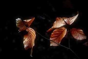 Herfst Bladeren van Bert Seinstra