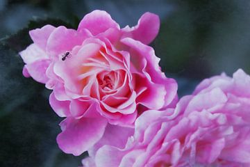 Mier op rozenbloesem van Christine Bässler