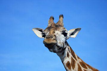 Giraffe von Marieke Peters-Brugmans
