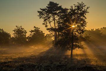 Gouden zonsopkomst van Huub Hugens