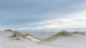 Die Dünen bieten uns Schutz gegen das Meer.