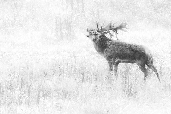 koning van het woud