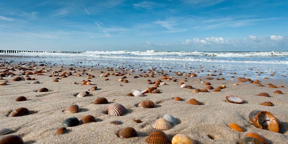 Schelpen op het strand van Dirk Huckriede
