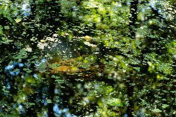 Lichtpunkte auf dem Boden zwischen der Wasserlinse von Mandy Metz
