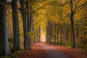 Herbstlicher Spaziergang von Mark Bonnenberg