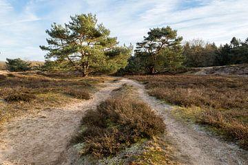 Heideveld van Richard Gilissen