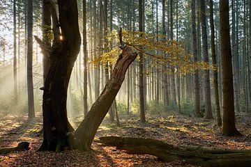Letzter Ast auf einem alten Baum von Cor de Hamer
