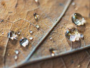 Herfstblad met waterdruppels