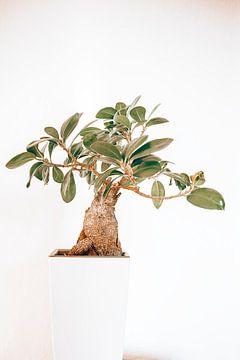 little tree von Michael Schulz-Dostal