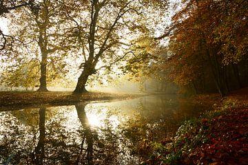 Mistige ochtend in de herfst sur