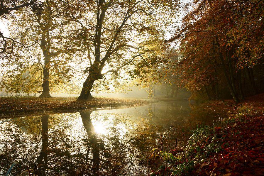 Mistige ochtend in de herfst van Michel van Kooten