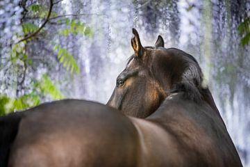 Kwpn paard onder de blauwe regen van Daliyah BenHaim