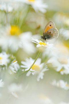 Hooibeestje tussen de bloemen van Simon Hazenberg
