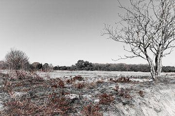 Mantingerzand in zwart-wit en wat roodbruin van Jan Meijer
