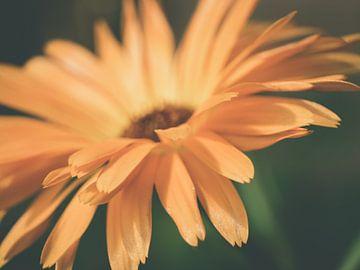 Oranje Bloem in Donkere Omgeving Close-up Macro van Art By Dominic
