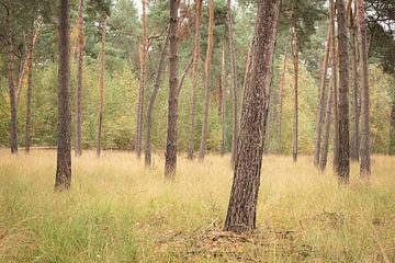 landschap van dennenbomen in de herfst van Susan van Etten