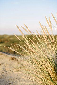 Duingras aan het strand I   Bloemendaal aan Zee   Nederland van Mirjam Broekhof