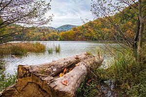 Aan de waterkant, Plitvice Nationaal Park, Kroatië van
