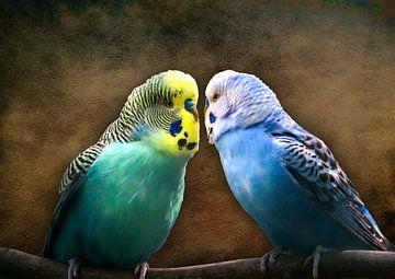 Liebe liegt in der Luft von Bert Hooijer