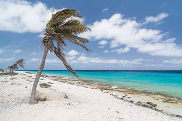Caribische Palmbomen in de wind aan het strand van
